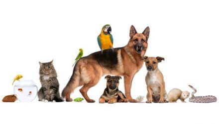 tienda para comprar comida mascotas